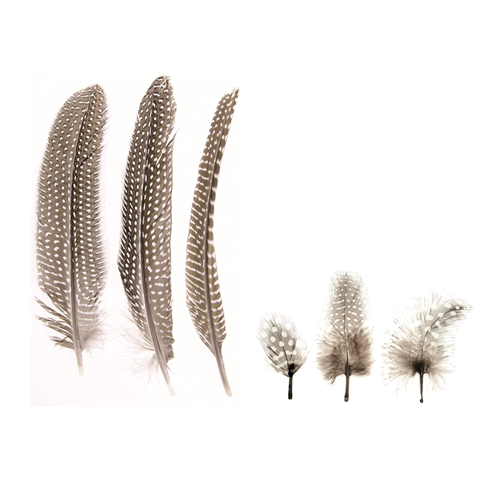 Glorex Guinea Fowl Feathers