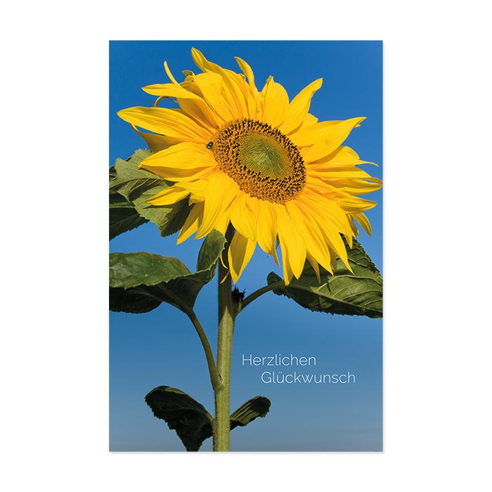 Natur Verlag Birthday Card - sunflower
