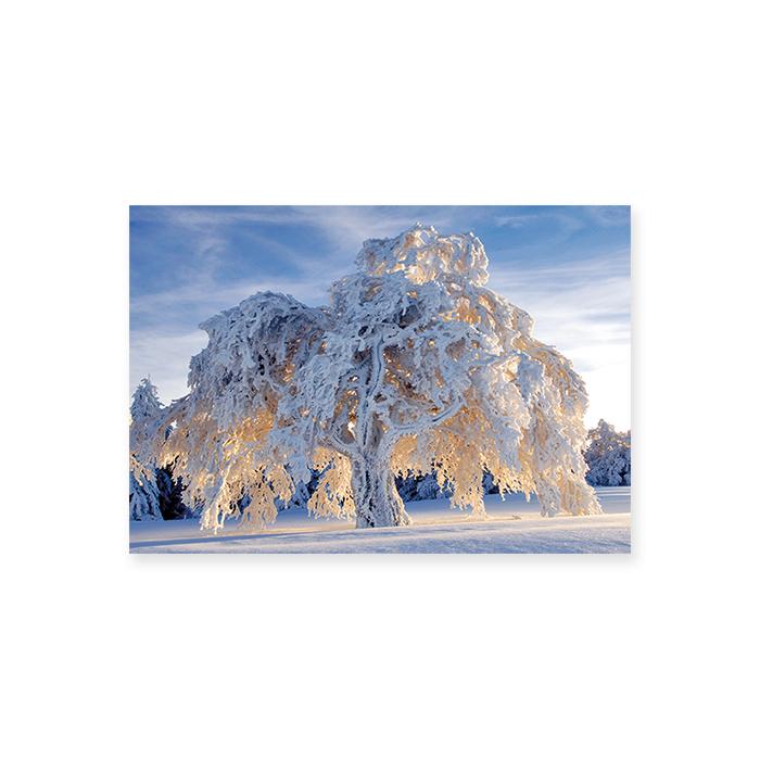 Natur Verlag Blankokarte - Baum im Schneegewand