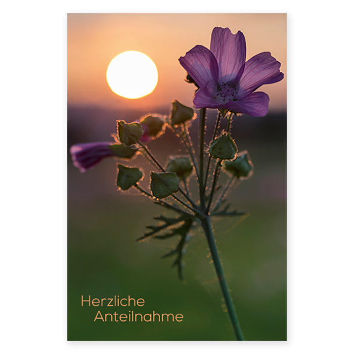 Natur Verlag Condolence cards - Wild mallow in the evening light