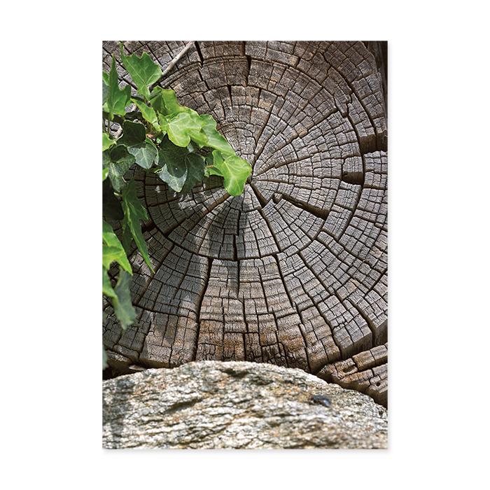 art bula Blank card - tree rings